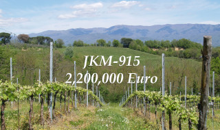 DO NOT MISS THE CHANCE. BUY VINEYARDS IN ITALY NOW