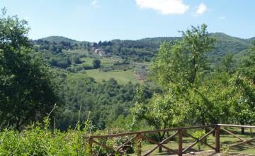 Farmhouses and farmsteads - JKM-974