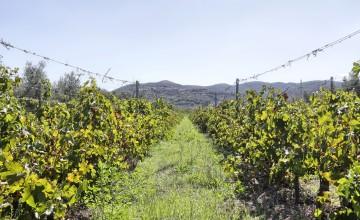 Gospodarstwa wiejskie i winnice - JKMMT-385