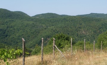 Aziende agricole e vitivinicole - JKM-1059